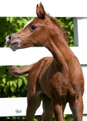 2011 filly by LM Boardwalk x JB Oksana